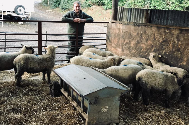 Sheep excel on grass silage and CMC lamb feed