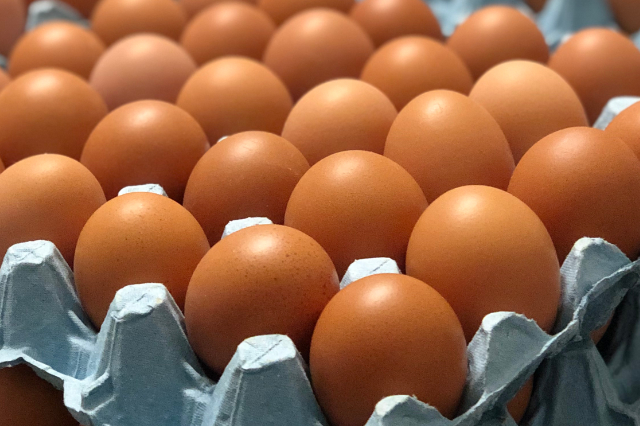 What influences egg shell quality?